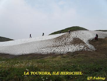 La toundra ile Herschel.jpg