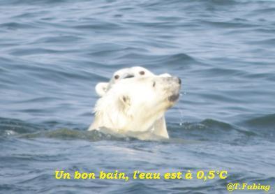 bain pour les ours.jpg