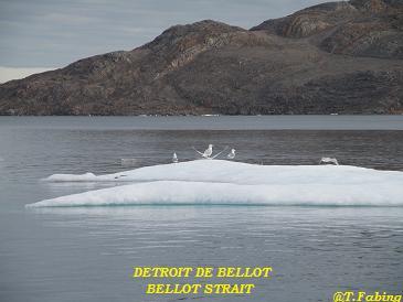 bellot2.jpg