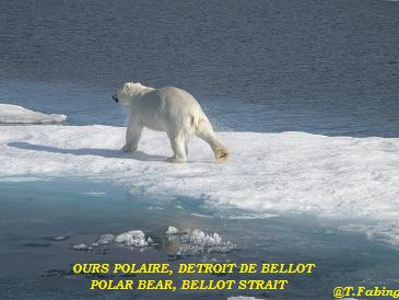 ours bellot.jpg